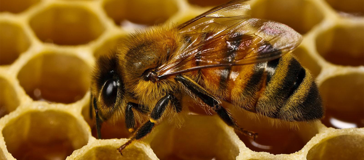 9 Interesting Facts About Honey